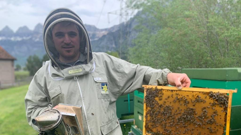 «Es tut weh» – wer steckt hinter den Bienendiebstählen in der Ostschweiz?