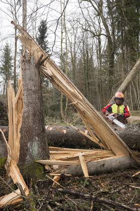 Aufräumarbeiten der Forstarbeiter nach dem Wintersturm Burglind, Seengen, 23. Januar 2017