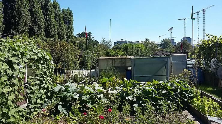 122 Familiengärten in Zürich Altstetten sollen dem geplanten ZSC-Stadion weichen