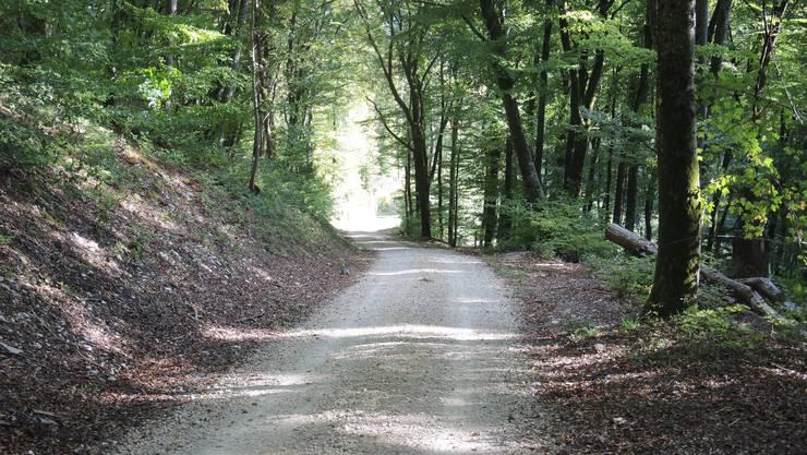 Beschriftete Waldwege sind Schlieren zu teuer.