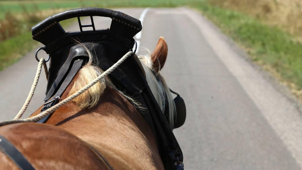 Töfffahrer streift Pferd und Kutsche und flüchtet – Tiere verletzt