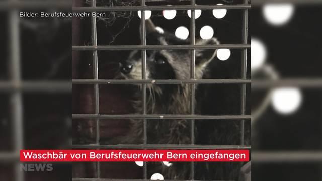 Swiss-News