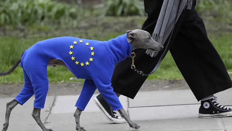 Auch der Hund muss ran: Vierbeiner im europäischen Ganzkörperanzug.