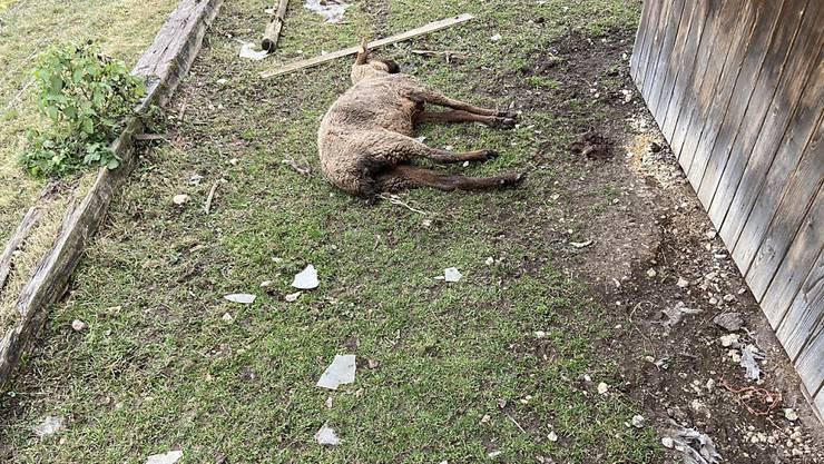 Am Dienstag, 4. Februar, entdeckte die Polizei mehrere schlecht gehaltene oder bereits tote Tiere. Der Halter ist wegen Tierquälerei vorbestraft.