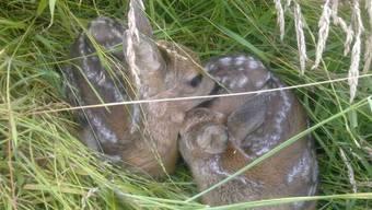 Die Leinenpflicht gilt der Sicherheit von Wildtieren wie Rehkitze.