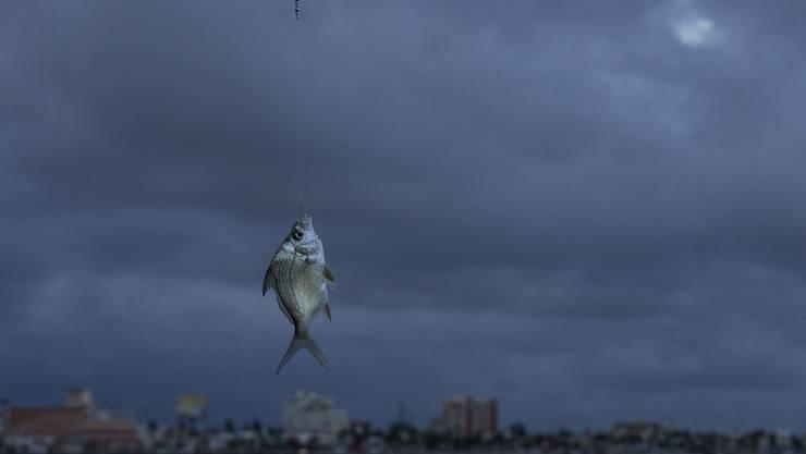 In den letzten Jahren wurde viel getan, um den Fischern die Freude an ihrem Hobby zu nehmen.