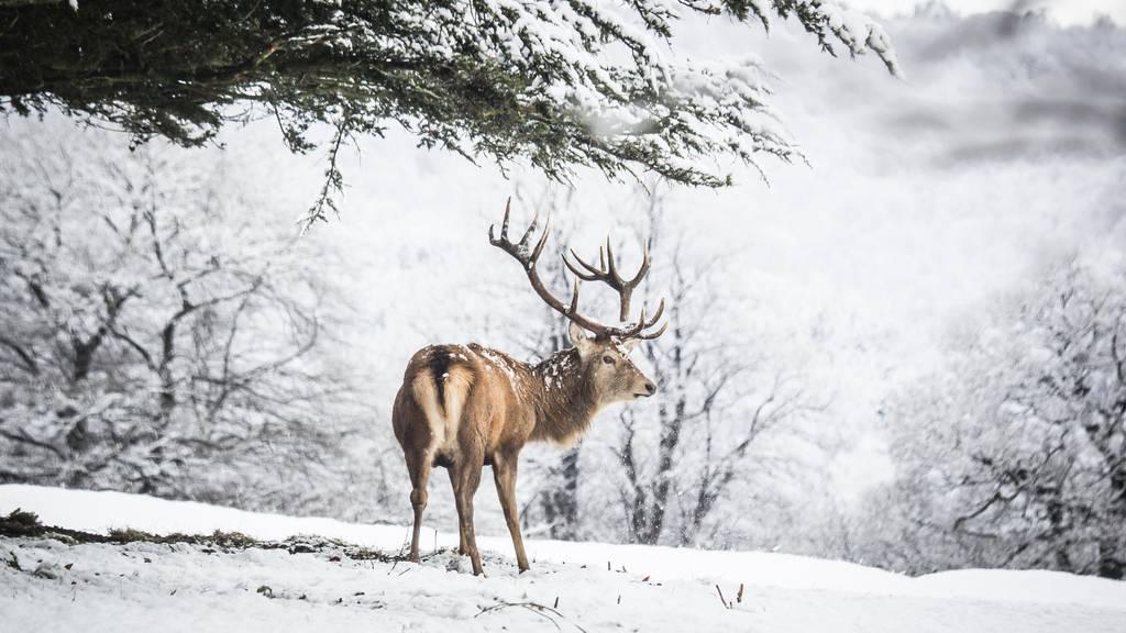 Im Kanton Graubünden ist es verboten, Wildtiere zu füttern.