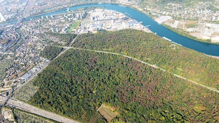 So sah es letztes Jahr ab Ende Juli im Hardwald in Muttenz aus. Die braunen Flecken sind vorwiegend Buchen, die ihre Blätter vorzeitig abstossen.