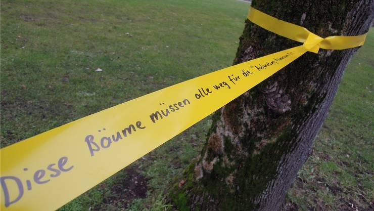 Plastikbändel markieren die Bäume, die gefällt werden müssten. Katja Schlegel