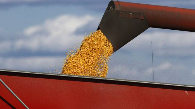 Geernteter Mais wird umgeladen (Archiv)