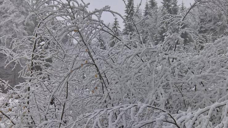 Winter Wonderland in Leutwil.