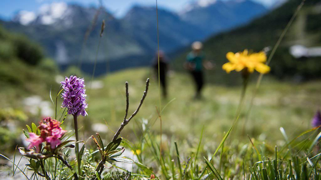 Zuhause ist es am schönsten: Graubünden, das Wallis und das Tessin sind die Lieblingsferienziele der Schweizerinnen und Schweizer. (Symbolbild)
