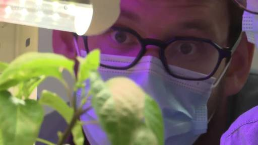 Urner Jungunternehmer züchten Gemüse mit Fischkot
