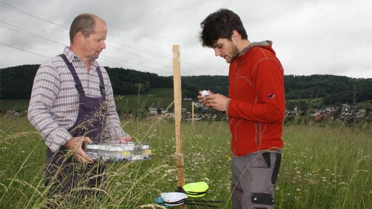 Bauer Gerhard Baumann und Doktorand Louis Sutter prüfen, wie viele Insekten auf der  Wiese des Klosters in die Falle gegangen sind.