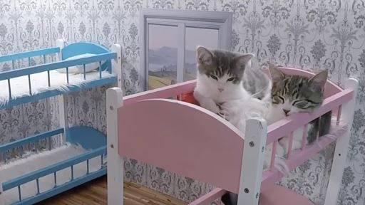 «Keeping up with the Kattarshians»: die besten Momente aus der Katzen-WG.