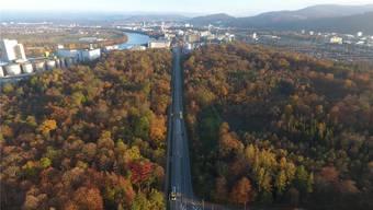 Pfeilgerade durch den Hardwald führt die Rheinfelderstrasse. Der Grundwasserschutz ist hier heute ungenügend.