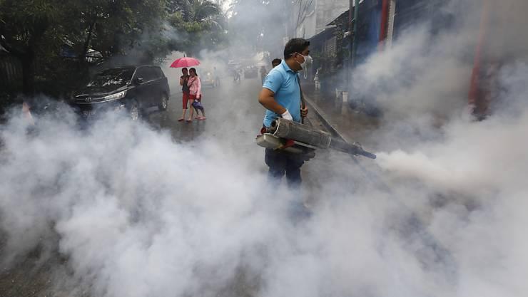 In der Region von Manila versucht das Gesundheitsministerium die Stechmücken zu vernichten, die das Dengue-Virus übertragen.