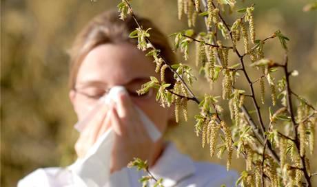 haselpollen plagen allergiker wegen fr hlings hnlichen temperaturen basel stadt basel bz. Black Bedroom Furniture Sets. Home Design Ideas