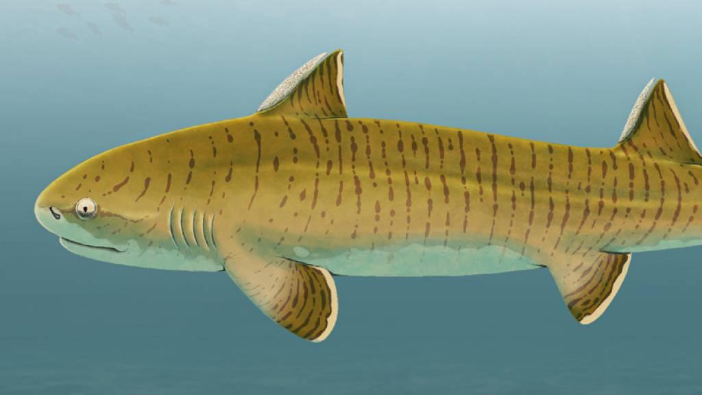 Fossilfund entlarvt Urzeithai als einen der grössten seiner Zeit