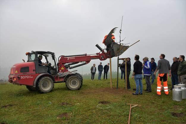 Weil der Boden so hart ist, muss Bauer Toni Burger mithilfe der Baggerschaufel die Stützpfähle in die Erde treiben.