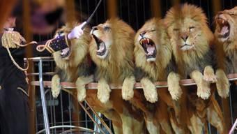 Die 65-Jährige hatte sieben Jahre lang für den Circus Royal gearbeitet und sich dort regelmässig über die Demonstrationen von Tierrechtsaktivisten geärgert. (Symbolbild)