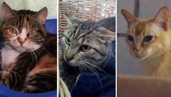 Ausgesetzte Tiere suchen ein neues Zuhause
