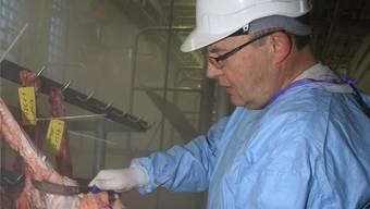 Hansjakob Leuenberger, Tierarzt und Fleischschauer, untersucht die Innereien eines Kalbes.