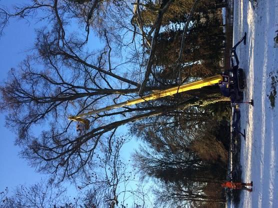 Wegen des Hitzesommers wurden im Bally Park in Schönenwerd viele Bäume beschädigt. Im Winter 2019 mussten deshalb viele davon gefällt werden.