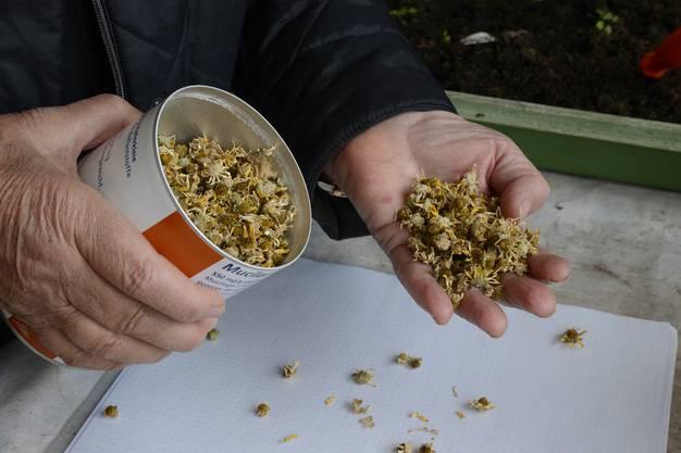 Blütenköpfchen «Million Suns», bei denen die Samen per Wallholz herausgebrochen werden müssen.