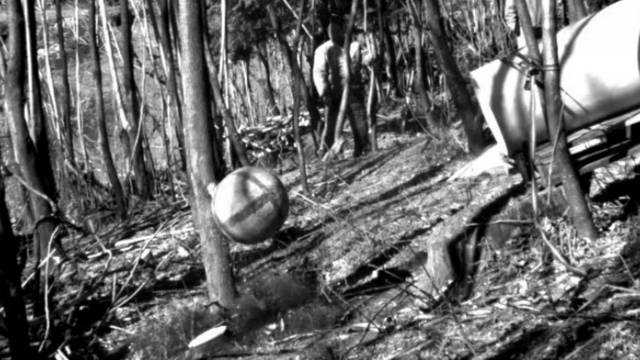 Granitball gegen Götterbaum: Wer ist stärker?