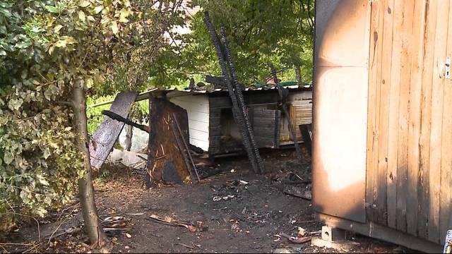 Feuerwehr rettet Häsli aus Gartenhaus-Flammen