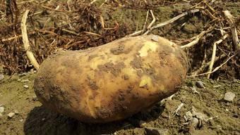 Viele Kartoffeln bleiben liegen: Die Dekadenz der Marktwirtschaft