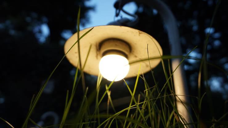 Igel, Frosch und Glühwürmchen bräuchten die Dunkelheit zur Nahrungssuche.