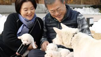 Hunde-Diplomatie: Die Pungsan-Hündin Gomi war ein Geschenk des nordkoreanischen Machthabers Kim Jong Un an den südkoreanischen Präsidenten Moon Jae In. Nun hat sie einen Wurf Welpen geboren.