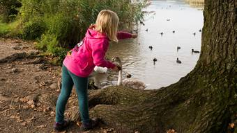 Celine füttert am Klingnauer Stausee Schwäne und Enten mit altem Brot – geht es nach den Plänen des Kantons, soll dies künftig nicht mehr erlaubt sein.