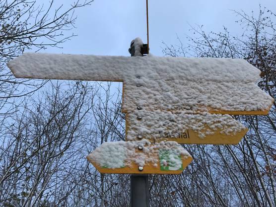 Montagmorgen auf Höhe Tiefmatt ob Oberbuchsiten