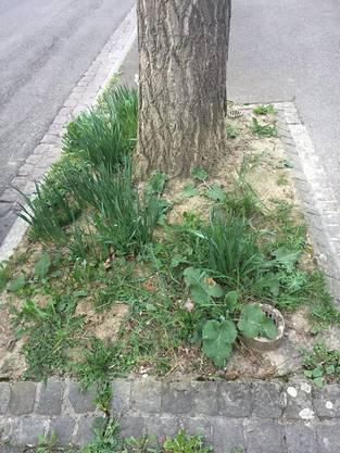 Auch das empfindliche Wurzelwerk des Baumes wurde ausgegraben.
