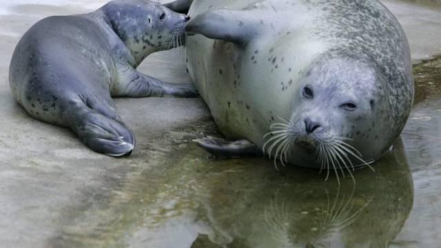 Es wurden mehr als 26'000 Seehunde gezählt (Archiv)