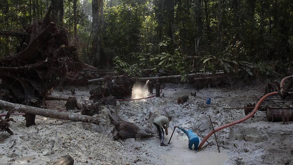 Brasilien: Goldabbau zerstört zunehmend Indigenen-Gebiete