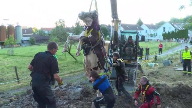 Feuerwehr rettet trächtige Kuh vorm Ertrinken