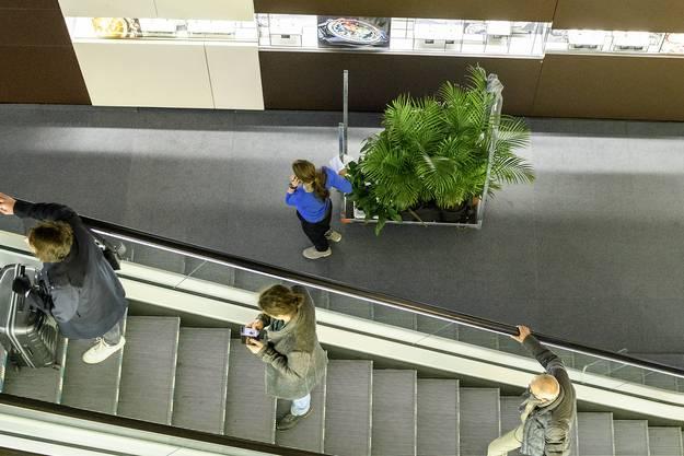 Pflanzentransport...
