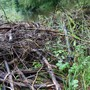 Durfte entfernt werden: Biberdamm im Unterrütikanal in Merenschwand.