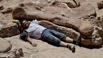Bislang unbekannte Dinosaurier-Art bei Ausgrabungen in Patagonien entdeckt.