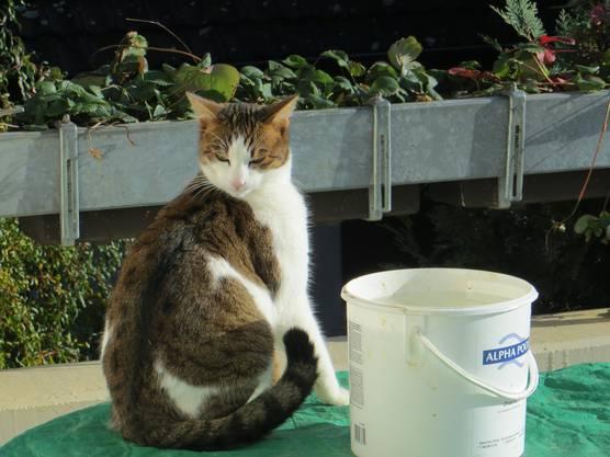 Sogar Nachbars Katze geniesst bei uns das Wasser und die Sonne
