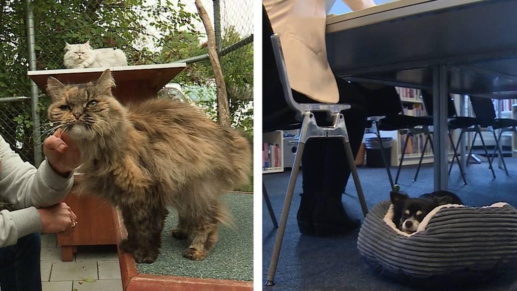 Tierisch: Shiatsu für Katzen und Hunde im Büro