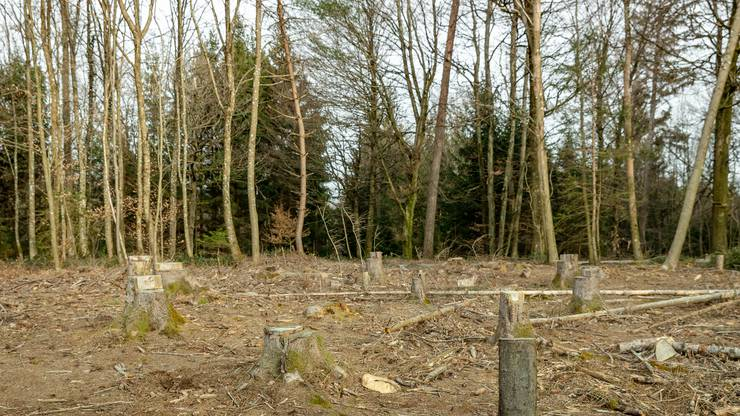 Mit der Initiative sollen unter anderem Bäume wie Edelkastanien, Wildobst, Zitterpapeln und Birken gesetzt werden.