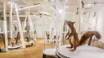 Sonderausstellung Eichhörnchen im Naturmuseum Solothurn