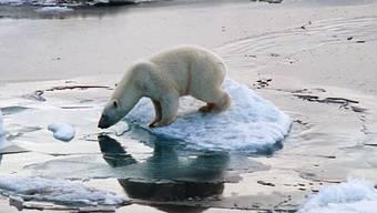 Ein Eisbär auf einer Scholle (Archiv)