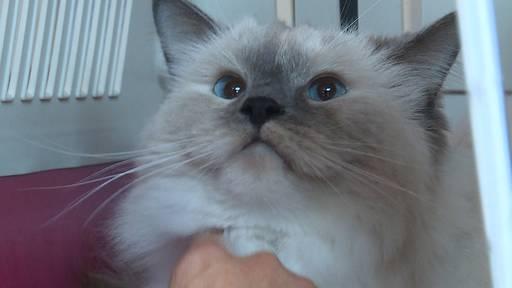 Pension für behinderte Katzen