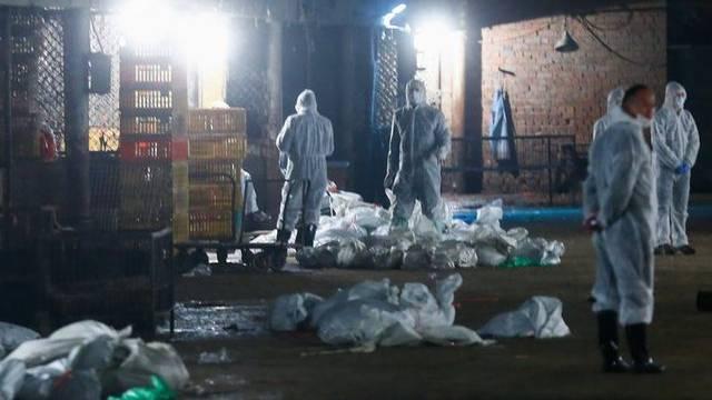 Die Vogelgrippe breitet sich in Shanghai aus
